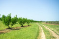 Curved path by the orchard in vineyard Stock Image