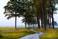 Curved path between trees Royalty Free Stock Photography