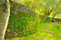 Curved Retaining Wall Stock Image