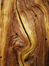 Curved wood grain Stock Photos