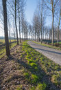 Curving country road with bare trees on both sides Royalty Free Stock Photo