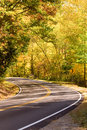 Curving highway through forest Royalty Free Stock Photo