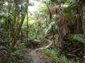 Curvy path in tropical rainforest el yunque puerto rico Stock Photo
