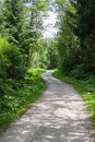 Curvy road in the forest Royalty Free Stock Images