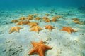 Cushion sea stars oreaster reticulatus undersea on sandy seabed in the caribbean panama central america Stock Images