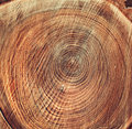 Cut down a tree texture of rings on sawn wood Royalty Free Stock Photo