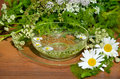 Cut flowers in water bowl Royalty Free Stock Photo