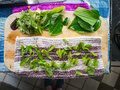 Cut Herbs drying on a chopping board. Royalty Free Stock Photo