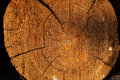 Cut log showing rings and cracks. Hi-res cross section cut of tree showing growth rings tree rings, annual rings Royalty Free Stock Photo