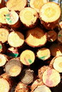 Cut logs at the edge of the forest Royalty Free Stock Image