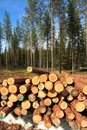 Cut logs at the edge of the forest Royalty Free Stock Photos
