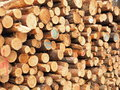 Cut pine logs stacked up for transport Royalty Free Stock Photo