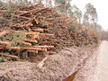 Cut pine logs stacked up for transport in a forest Royalty Free Stock Photo