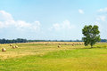 Cut Summer Hay Field Royalty Free Stock Photo