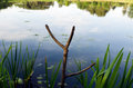 Cut tree branch fishing rod stand on lake shore Stock Image