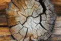 Cut tree close-up Royalty Free Stock Photo