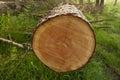 Znížiť strom krúžky v les
