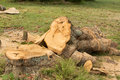 Cut up tree down and for firewood Stock Photography