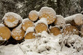 Cut Wood Logs in Snow Royalty Free Stock Photo