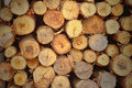 Cut wood stump log texture Royalty Free Stock Photo