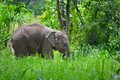 Cute asia baby elephant in forest Stock Photo