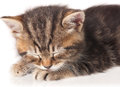 Cute asleep kitten Royalty Free Stock Photo