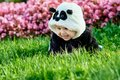 Cute baby boy wearing a Panda bear suit sitting in grass and flowers at park. Royalty Free Stock Photo