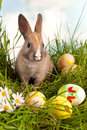 Cute baby easter bunny easter eggs grass Royalty Free Stock Images