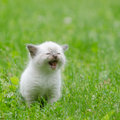 Cute baby kitten in the grass Stock Photo