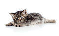 Cute baby kitten lying on floor Royalty Free Stock Photography