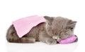 Cute baby kitten sleeping on pillow. isolated on white