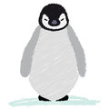 Cute baby penguin illustration of a little emperor isolated Stock Image