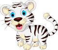 Cute baby white tiger walking illustration of Stock Image