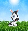 Cute baby zebra cartoon in the grass on a background of bright sunshine