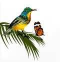 Cute background with  realistic detailed  tropical bird an Stock Photography