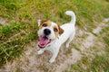 Cute barking dog Royalty Free Stock Photo