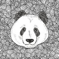 Cute bear panda portrait. Royalty Free Stock Photo
