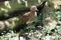 Cute bird a Royalty Free Stock Photography