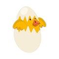 Cute bird nest icon