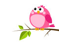Cute bird on spring branch pink Royalty Free Stock Image