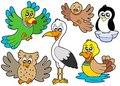 Cute birds collection 2 Royalty Free Stock Photography