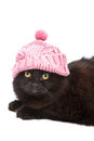 Cute black cat wearing pink cap isolated Stock Photography