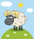 Cute black head ram sheep cartoon character on a hill mascot Stock Images