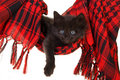 Cute black kitten in red hammock Royalty Free Stock Photos