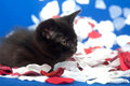 Cute black kitten with rose petals Stock Image