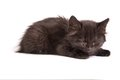 Cute black kitten on  a white background Stock Photos