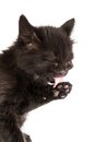 Cute black kitten on  a white background Royalty Free Stock Photo