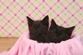 Cute Black Kittens On Pink Pre...