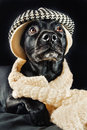 Cute black mutt Stock Images