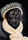 Cute black mutt Royalty Free Stock Images
